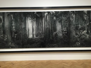 """Olympic Rain Forest"", 2012, 185.4x477.5 cm, 2/5"