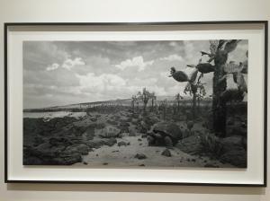 """""""Galapagos"""", 1980, 199.4x210.8 cm, 1/5"""