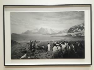 """""""Birds of South Georgia"""", 2012, 119.4x185.4 cm, 1/5"""